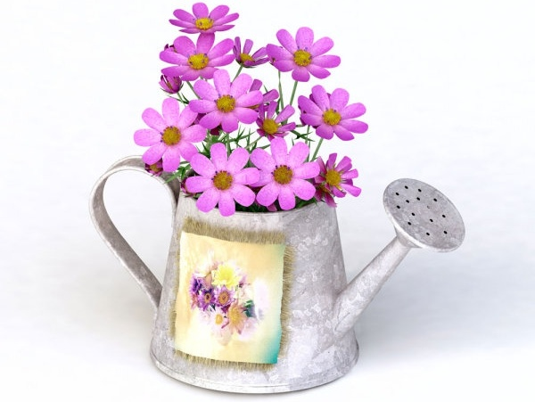 flowers kettle 01 hd pictures