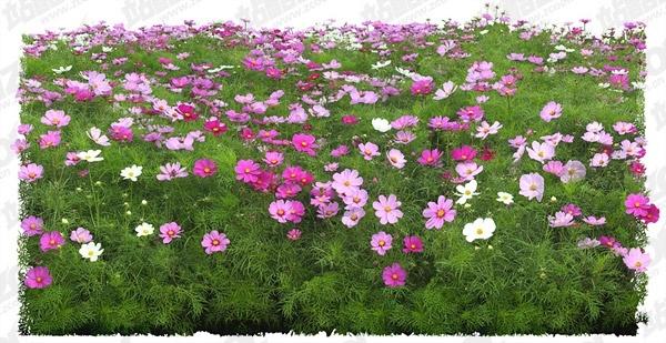 flowers psd layered 18