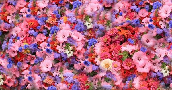 flowers spring park
