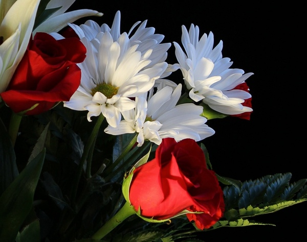 flowers white daisys red roses