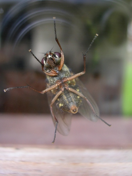 fly on the window
