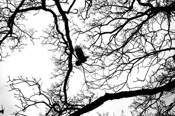 flying bird in the branches