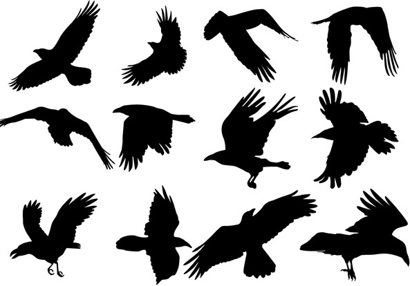 Flying Raven Silhouette Free Vector Download 6 665 Free