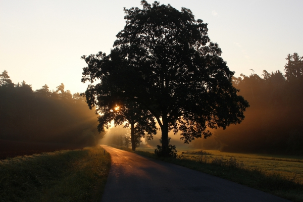sunlight in quiet countryside