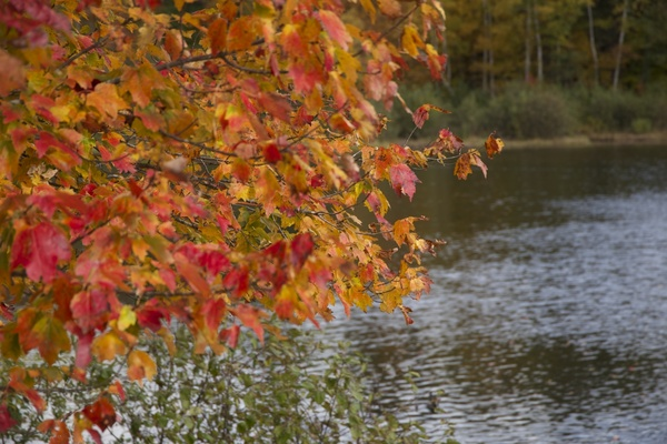 Foliage Autumn Leaves Trees Water Fall Free Stock Photos In Jpg