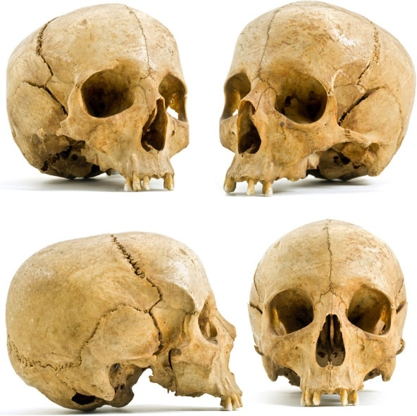 four different angles of the skull hd picture