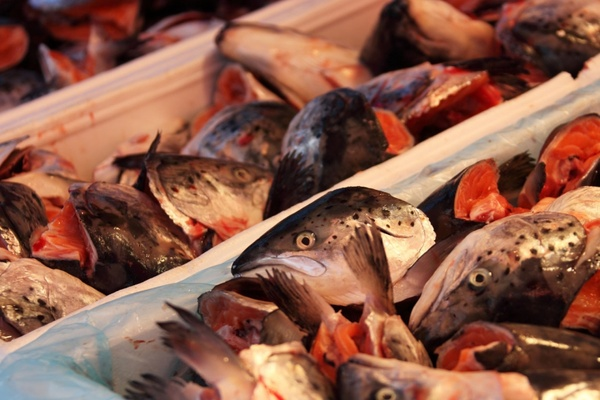 fresh fish heads