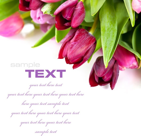 fresh flowers background hd photo 1