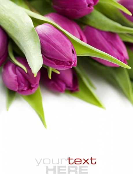 fresh flowers background hd photo 2