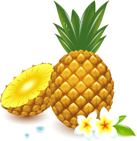 Fresh pineapple vector graphic Free vector in Encapsulated ...