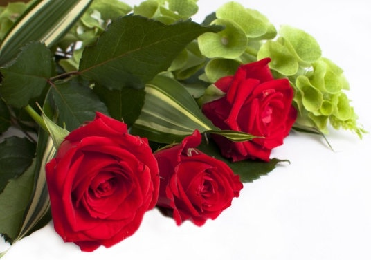 fresh roses 05 hd pictures