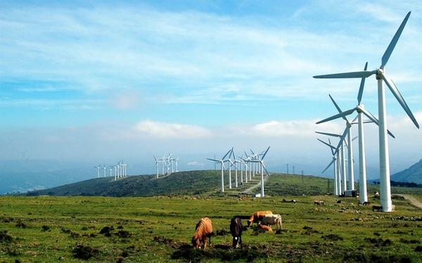 galicia windmills cows