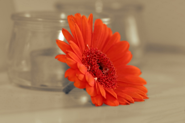 closeup of red flower near glass jars
