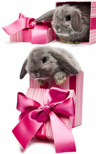 gift rabbit 02 hd pictures