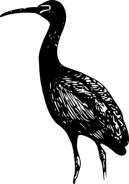 ibis free vector download 13 free vector for commercial