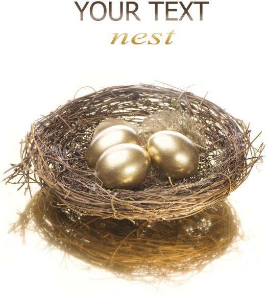 golden egg nest 05 hd pictures