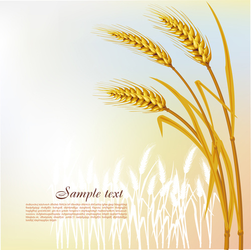 golden wheat vector background set