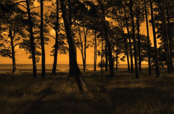 gotland forest