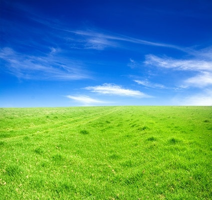 grass sky picture 5