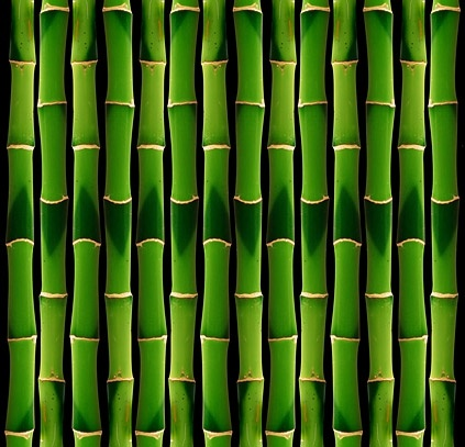 green bamboo background picture 2