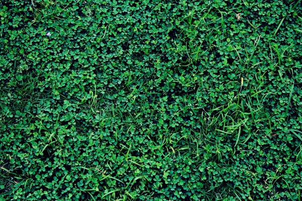 green grass background 2 free stock photos in jpeg jpg 1920x1280 format for free download 1 64mb green grass background 2 free stock