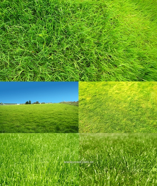 green grass grass closeup highdefinition picture 2 5p