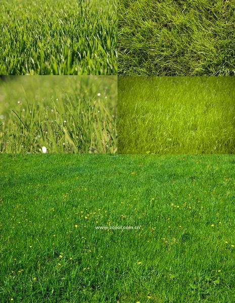 green grass grass closeup highdefinition picture 3 5p