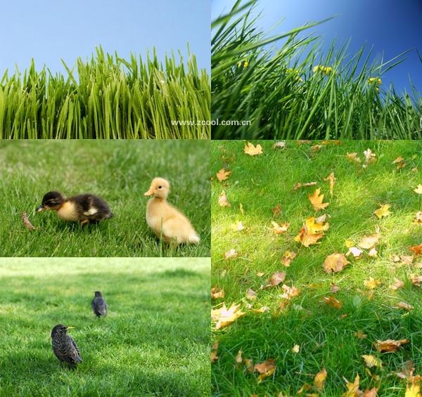 green grass grass closeup highdefinition picture 4 5p