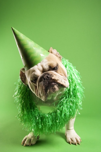 green hat with the end of the dog highdefinition picture