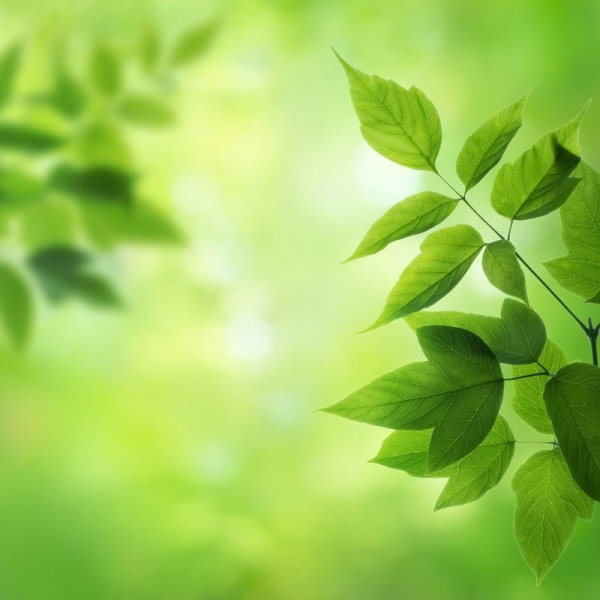 green leaf background 02 hd pictures