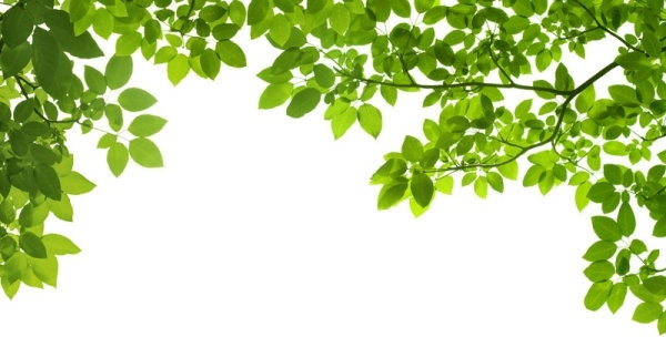 green leaf background 03 hd pictures