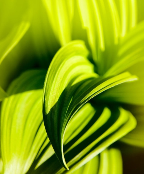 green leaf closeup highdefinition picture 3