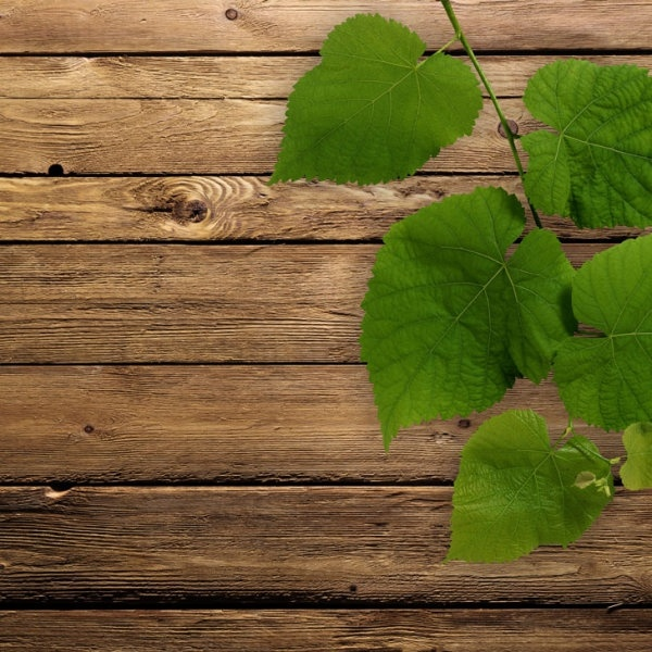 green leafy wood background 01 hd picture