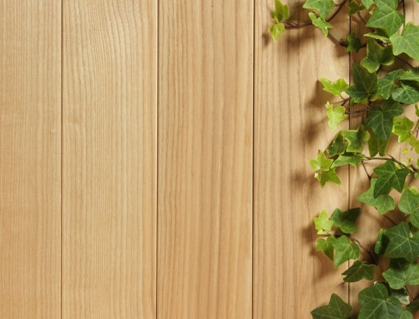 green leafy wood background 03 hd picture