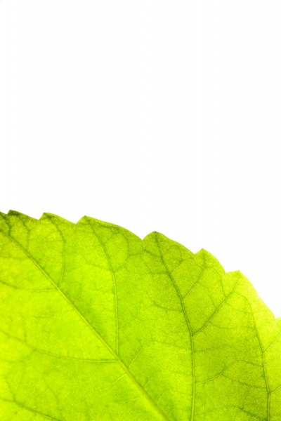 green leaves 02 hd pictures