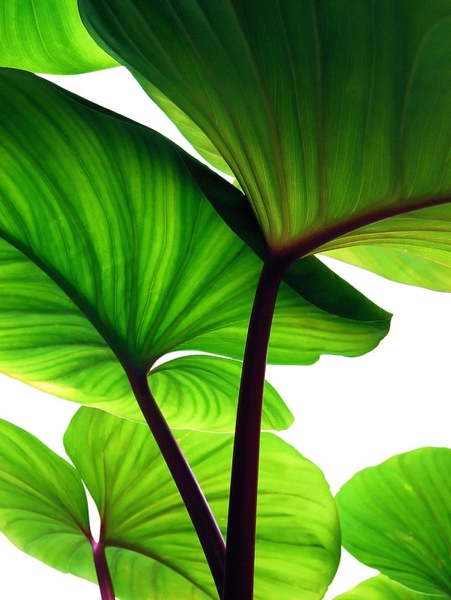 Green Plant Wallpaper Free Stock Photos Download 11 736 Free Stock Photos For Commercial Use Format Hd High Resolution Jpg Images