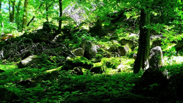 green nature