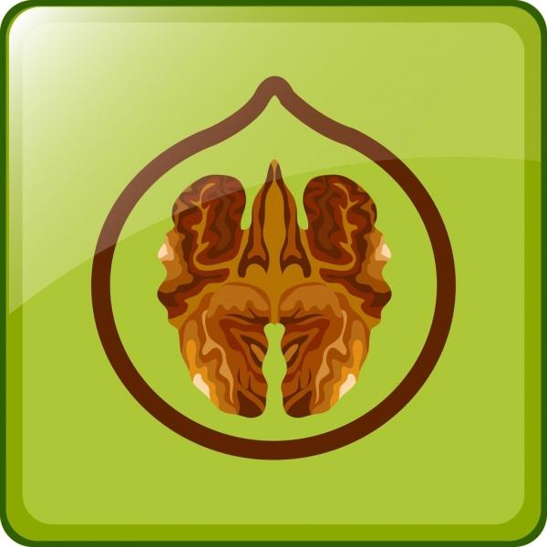 green nut background hazelnut icon flat design