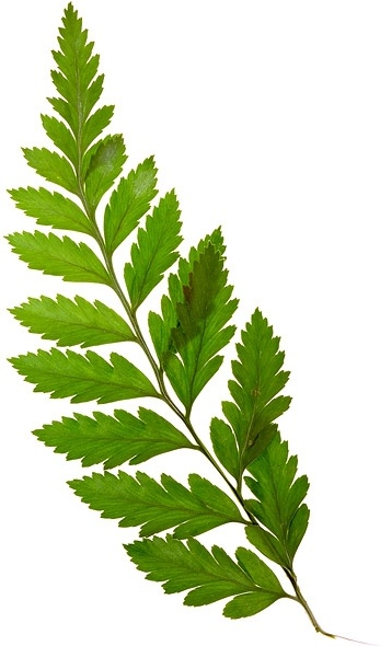 green plant leaves picture