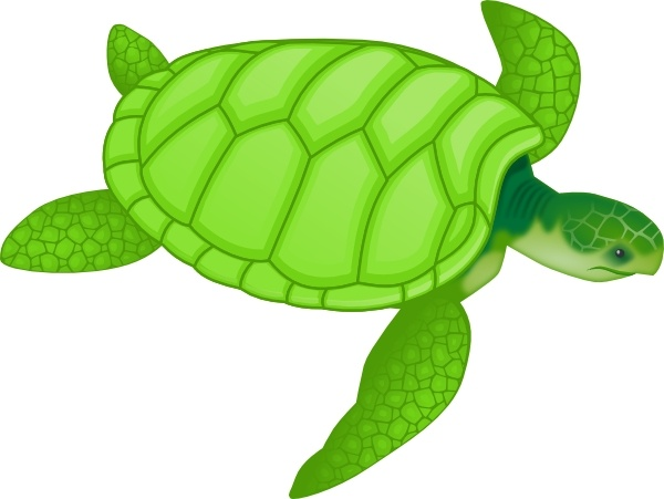 Green Sea Turtle Clip Art Free Vector In Open Office Drawing Svg