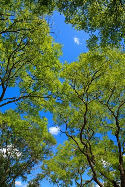 green tree canopy