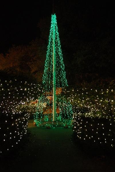 green tree of lights