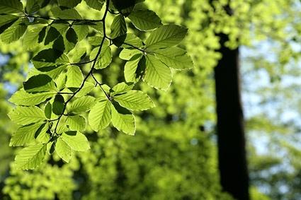 green vitality leaves stock photo
