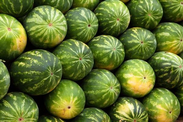 green watermelon background