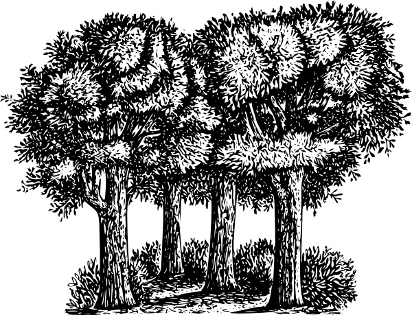 black and white forest tree clip art free vector download
