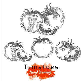 hand drawing tomatoes vector