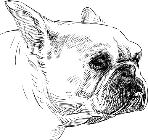 hand drawn dogs vector set