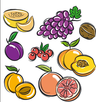 Hand Drawn Fruits Graphics Vector Free Vector In Encapsulated