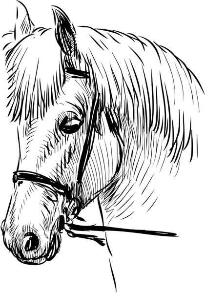 hand drawn horse vector set