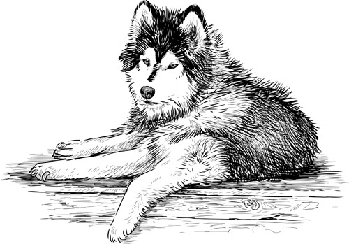 Hand Drawn Huskies Dog Vector Free Vector In Adobe Illustrator Ai